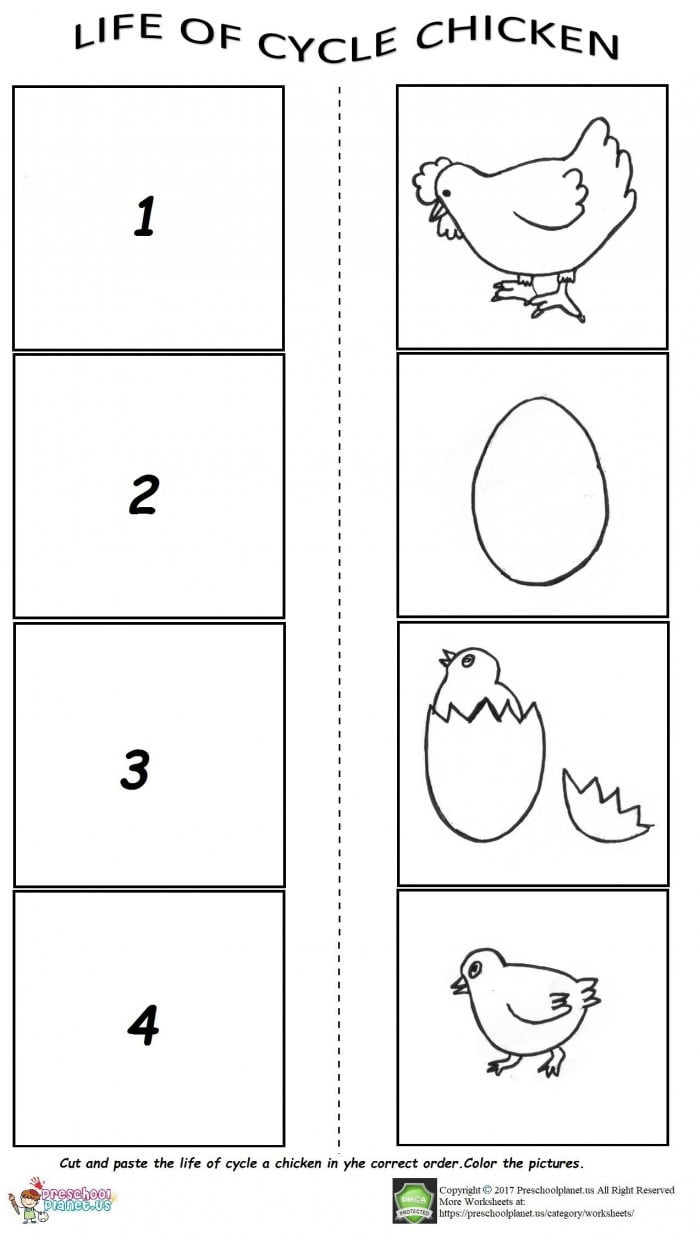 Life Of Cycle Worksheet For Preschool