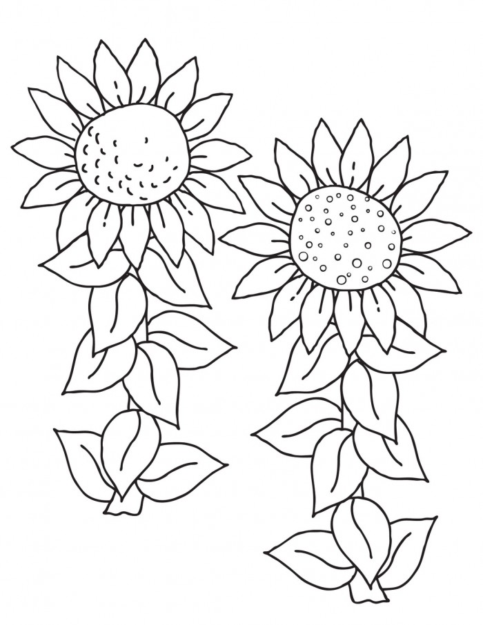 Free Sunflower Color Page Printable  Download Free Clip Art  Free