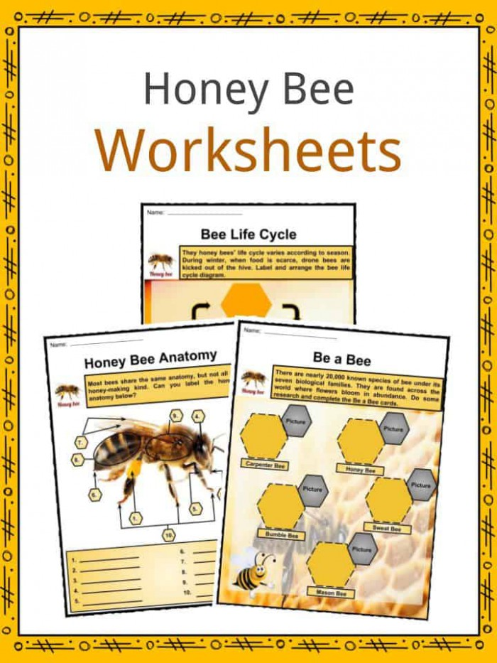 Honey Bee Facts  Worksheets  Anatomy  Lifespan   Diet For Kids