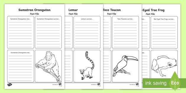Ks Rainforest Animals Fact File Worksheets Teacher Made