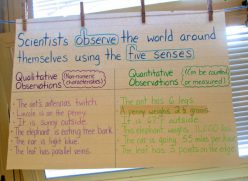 Vocabulary Cards: Five Senses Mystery Bags