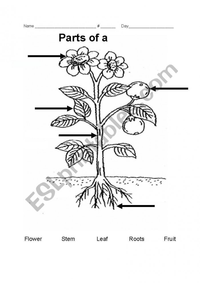 Name The Parts Of A Plant Worksheets | 99Worksheets