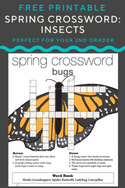 Spring Crossword Insects