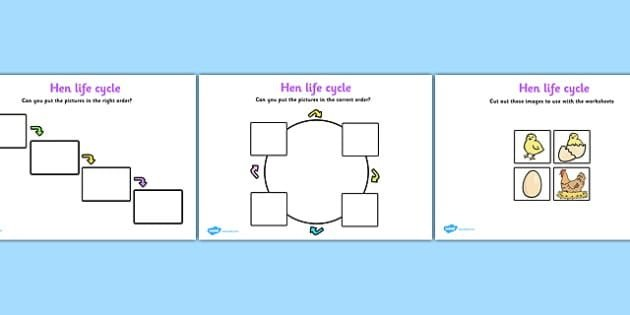 Life Cycle Of A Hen Worksheets