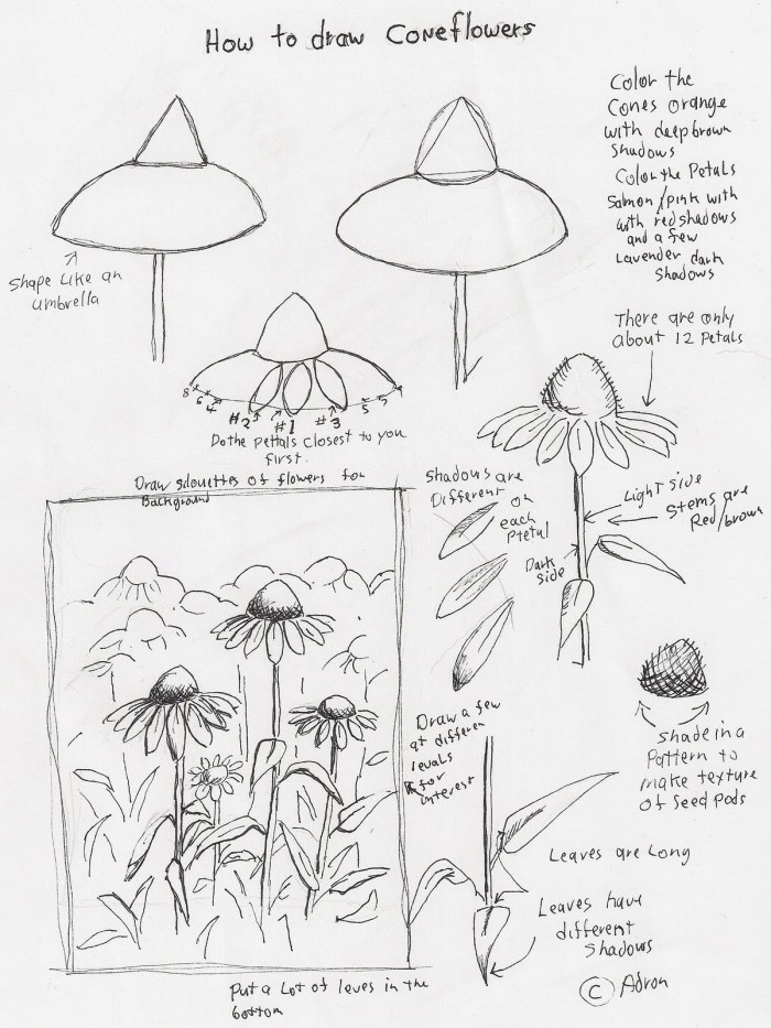 Adrons Art Lesson Plans How To Draw Cone Flowers Art Lesson For