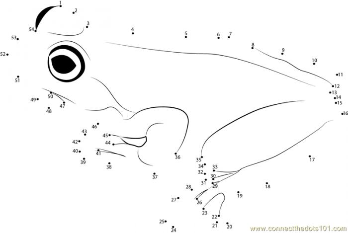 Brown Tree Frog Dot To Dot Printable Worksheet