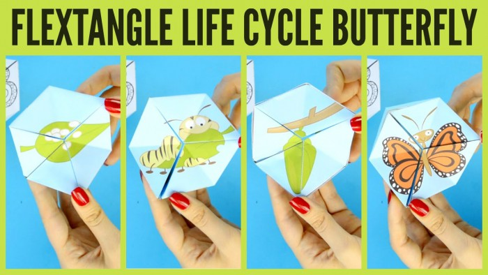 Butterfly Life Cycle Paper Toy Template