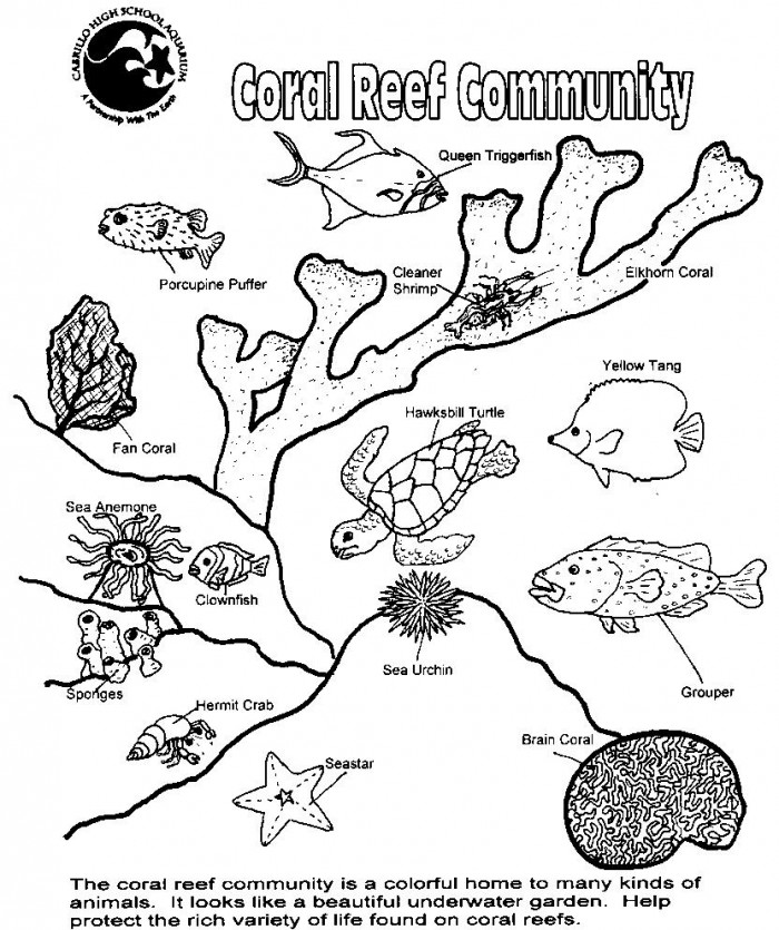 - Coral Reef Animals And Plants Worksheets 99Worksheets