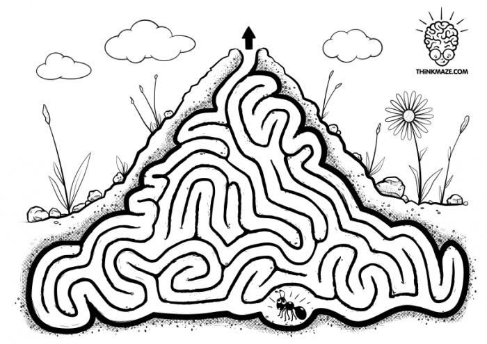 Crazy Ant Maze