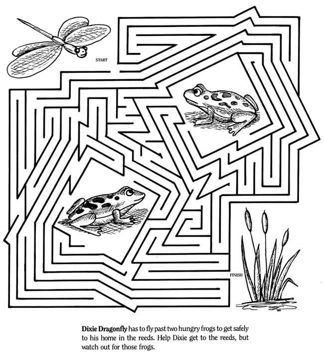 Dragonfly And Frog Maze With Images