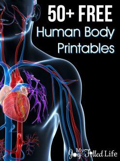 Organ Anatomy Scramble