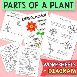 Missing Letters: Parts Of A Plant