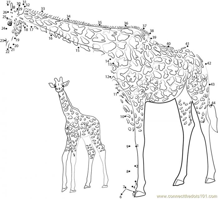 Giraffe With Baby Dot To Dot Printable Worksheet