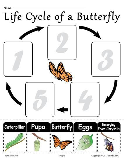 Life Cycle Of A Butterfly Printable Worksheet With Images