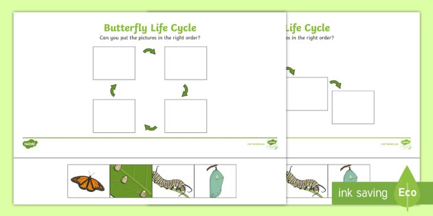 Minibeasts Life Cycle Of A Butterfly Worksheets