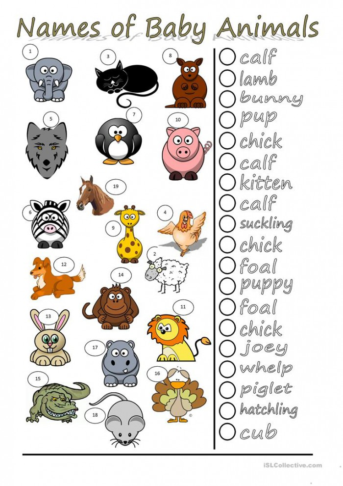Names Of Baby Animals