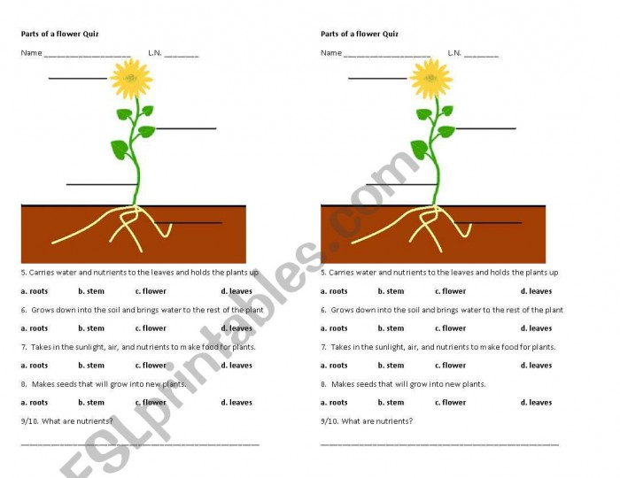 Parts Of The Flower Quiz
