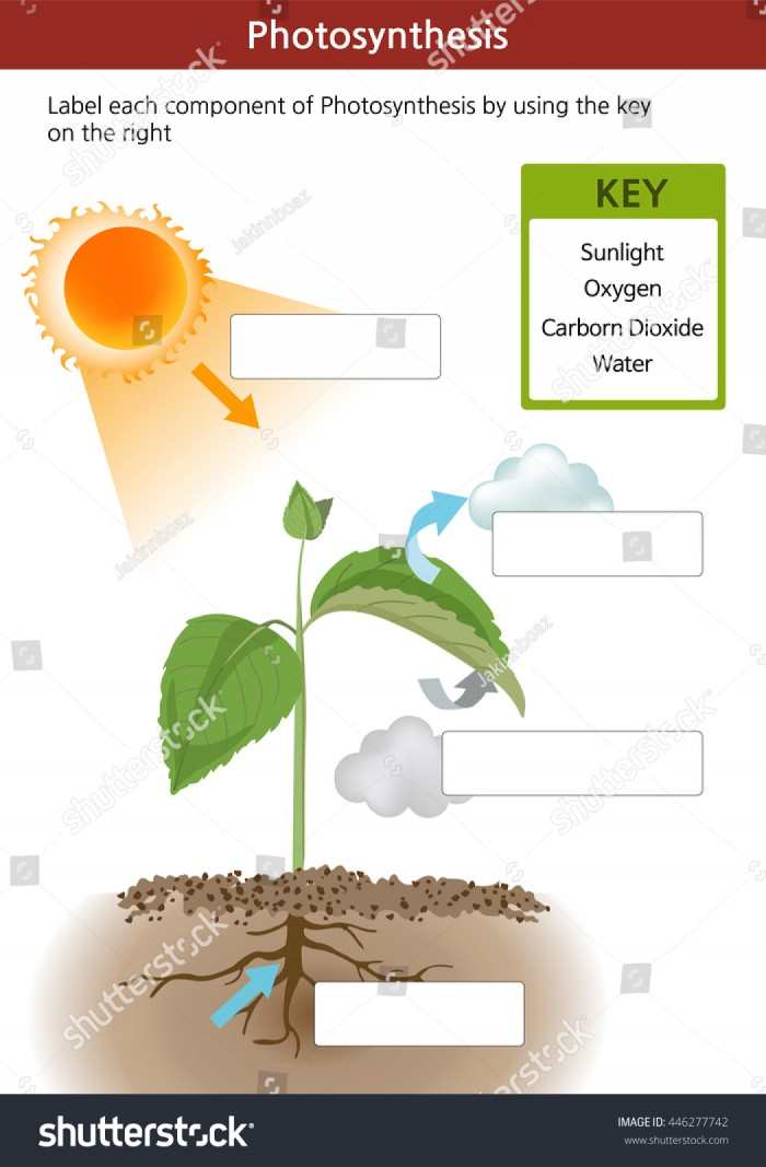 Photosynthesis Fill Blanks Worksheet Key On Stock Vector Royalty