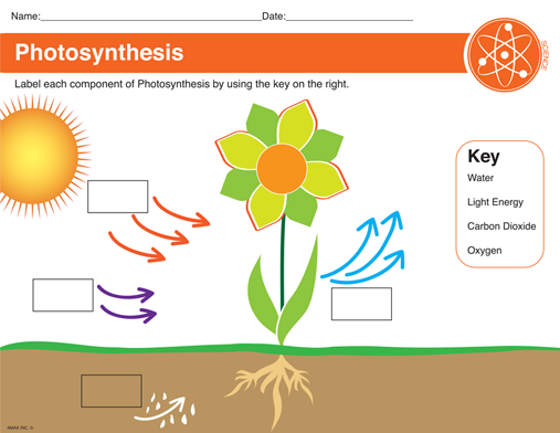 Photosynthesis Worksheet With Images