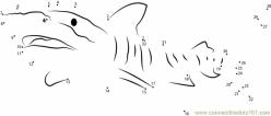 Shark Dot To Dot