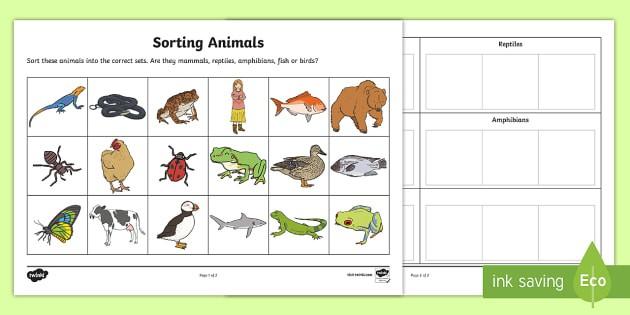 Sorting Animals Into Sets Worksheet Teacher Made