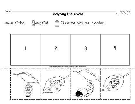 Teachers Check Out This Awesome Life Cycle Craft For Lady Bugs