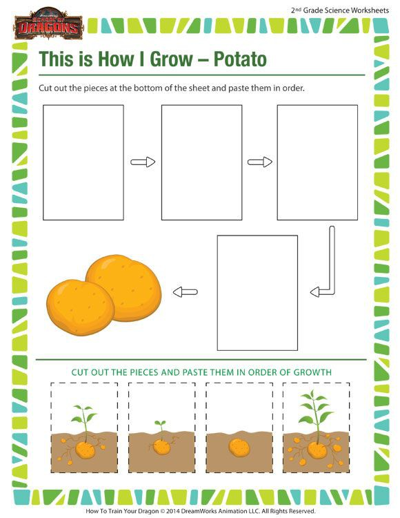 This Is How I Grow  Potato