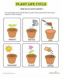 How Does A Flower Grow?