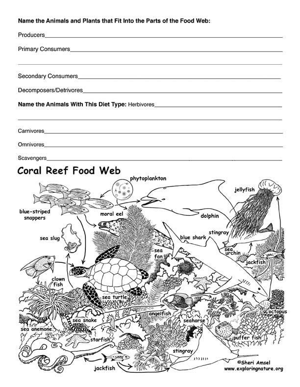A Coral Reef Food Web Exercise To Engage The Students And Build