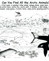 antarctica coloring page antarctic animals coloring pages pages 6