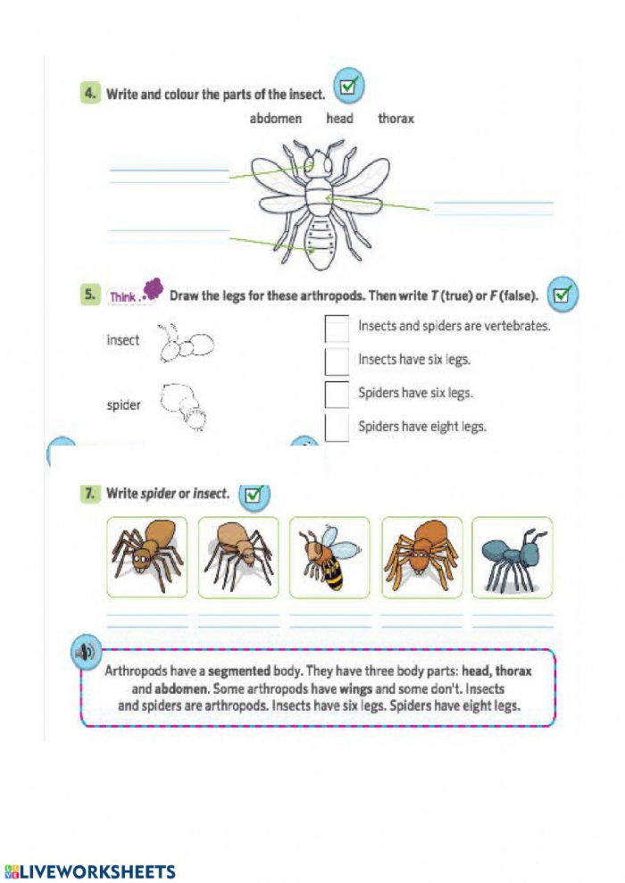 Arthropods Worksheet