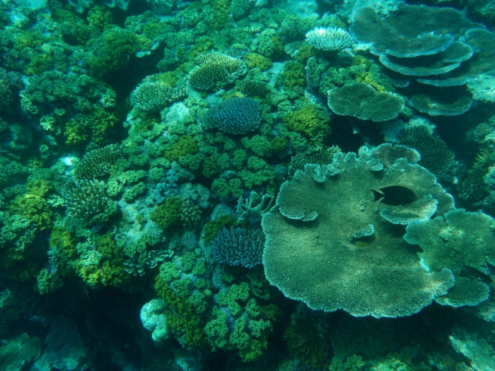 Coral Reefs Ecosystems Full Of Life