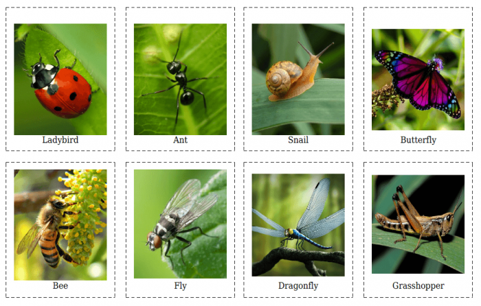 Flashcards Of Insects