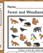 forest and woodland block diagram activity worksheet 8