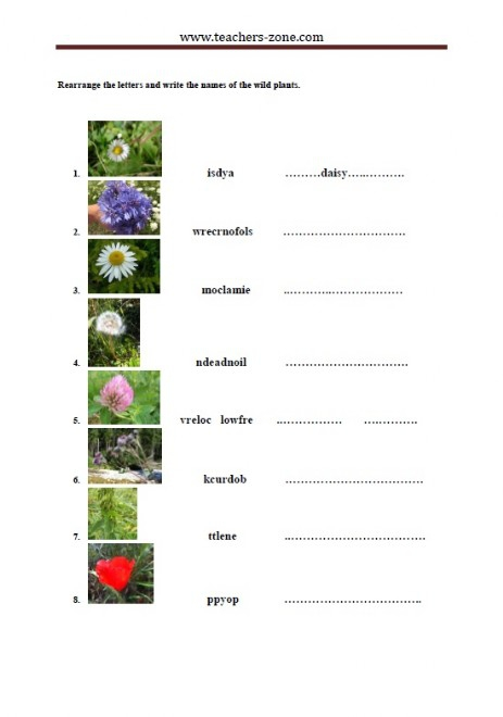 Free Wild Plants Worksheets