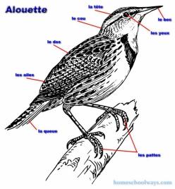 Alouette Song