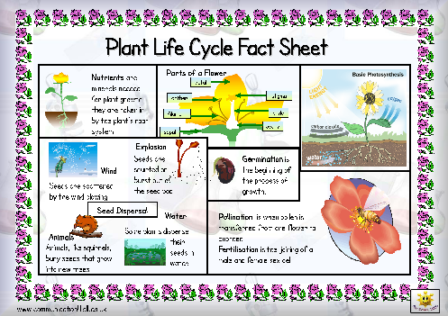 Heres A Page With Some Basic Facts About The The Life Cycle Of A