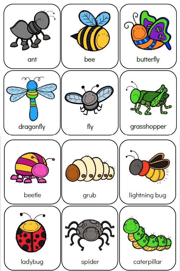 Heres Your Free Bug Flashcards