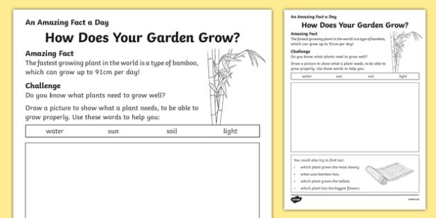 How Does Your Garden Grow Worksheet  Worksheet  Worksheet