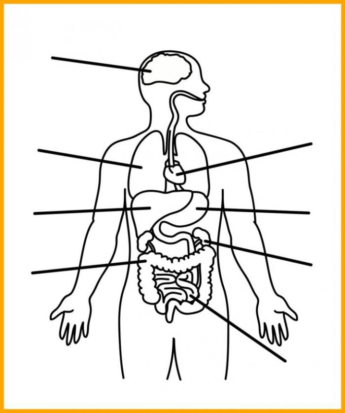 Human Body Diagram For Kids Anatomy Printable Labeling Worksheets