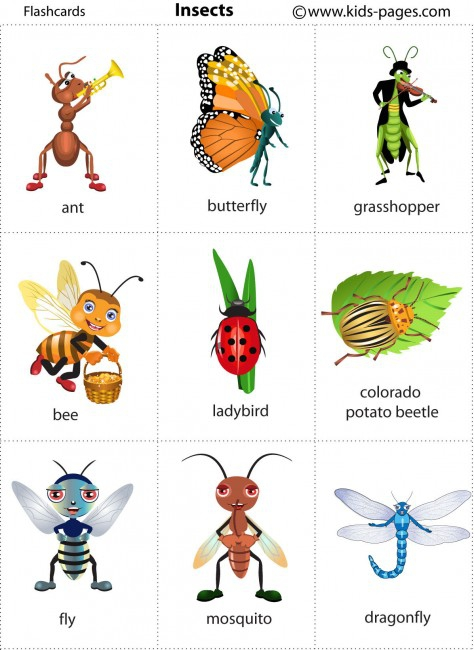 Insects Flashcard