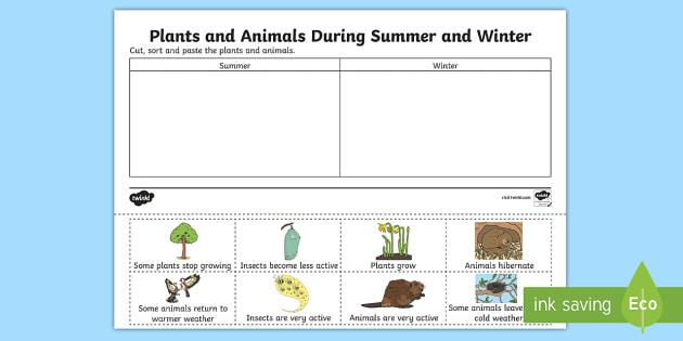 Plants And Animals During Summer And Winter Worksheet  Worksheet