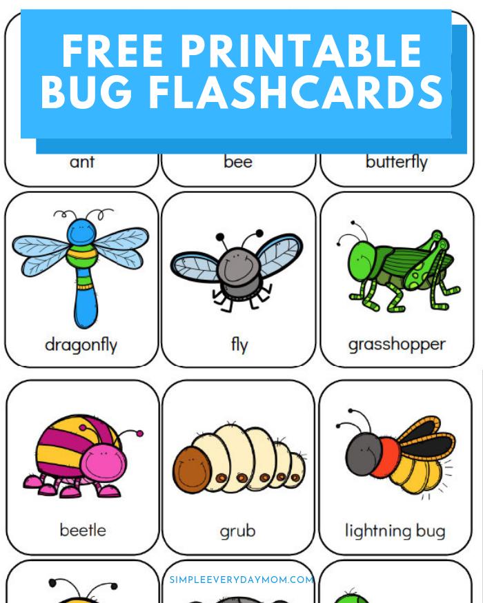 Printable Preschool Bug Activities For Learning   Fun