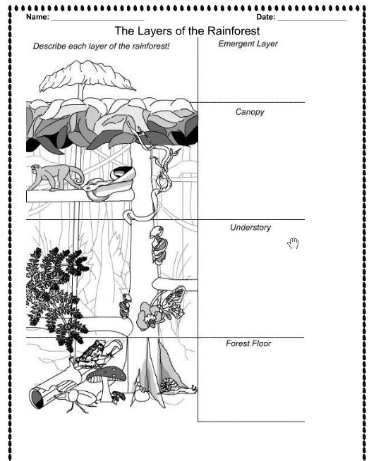 Who Belongs In The Rainforest? Worksheets 99Worksheets