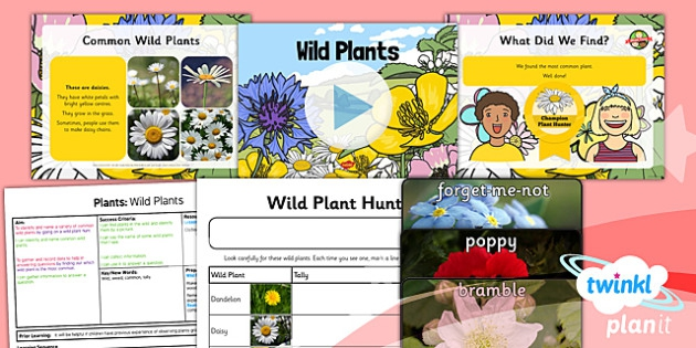 Science Plants Wild Plants Year  Lesson Pack
