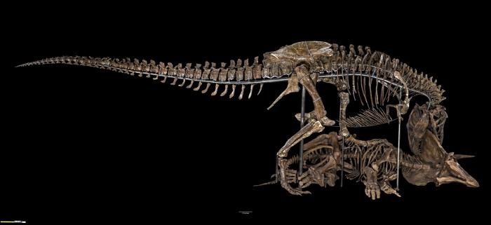 The David H Koch Hall Of Fossilsdeep Time