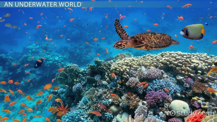 The Food Web   Ecosystem Of Coral Reefs