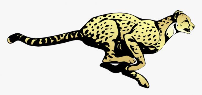 Cheetah  Running  Speed  Animal  Fast  Mammal  Spots