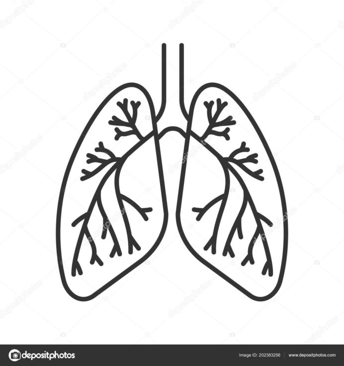 Cool Anatomy Coloring Book Respiratory System Sugar And Spice Emt