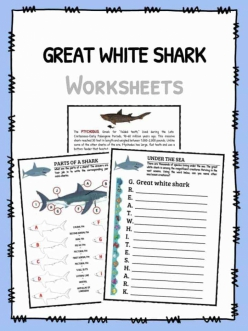 Color The Great White Shark